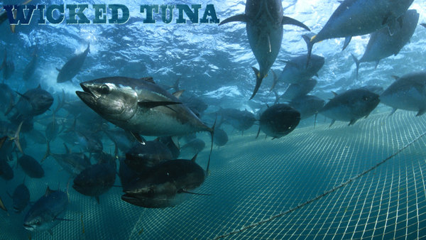 Wicked Tuna - S10E10