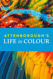 Attenborough's Life in Colour