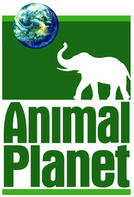 Animal Planet Documentaries